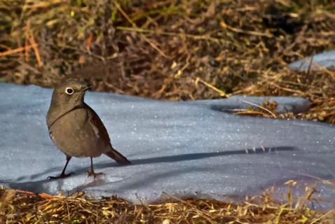 Last November was Colder than this October (Canon 7D with 100-400mm lens at 400mm, f/8, 1/5000, ISO 800)