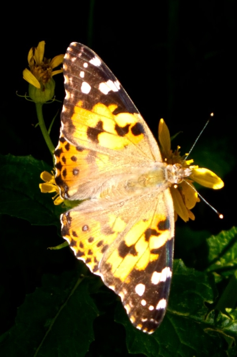 This Butterfly Lives at The Loch