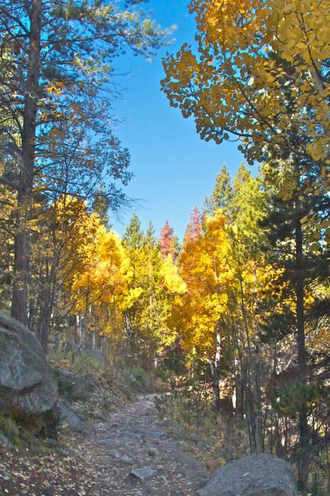 Aspens Turning on the Trail