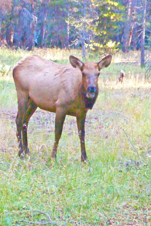 This Elk Didn't Like Me