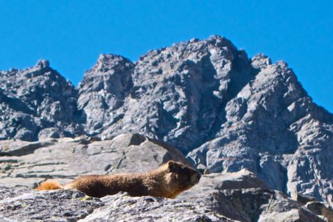 Marmot and Rock