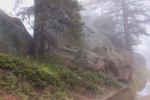 Rock and Tree and Fog