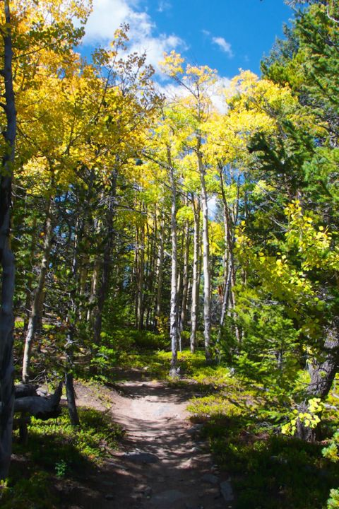 The Trail Through Turning Aspens
