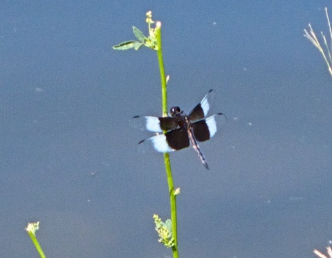 A Black Insect at the Lake