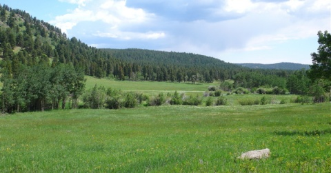 Meadow Along Blue Bird Loop Trail
