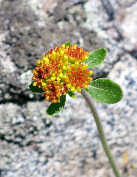 I Wonder What's the Name of This Flower in Front of A Stone?