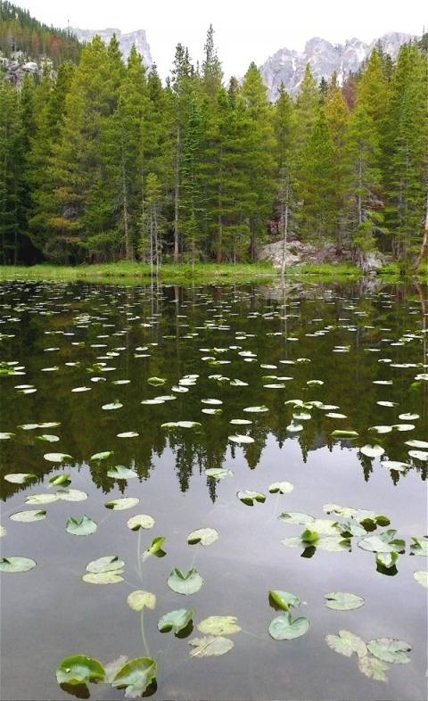 Nymph Lake Takes Its Name from these Water Lilies