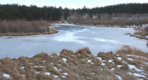 Frozen Pond at Caribou Ranch