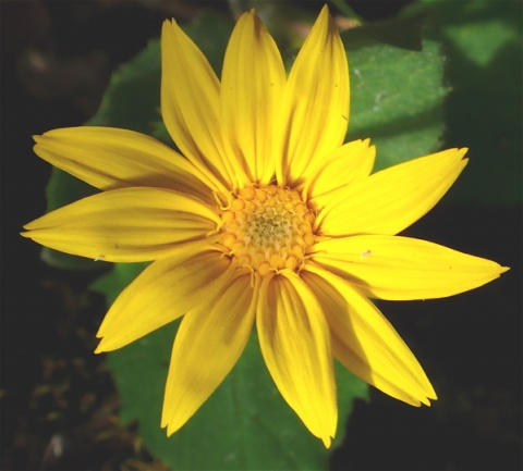 Bright yellow flower