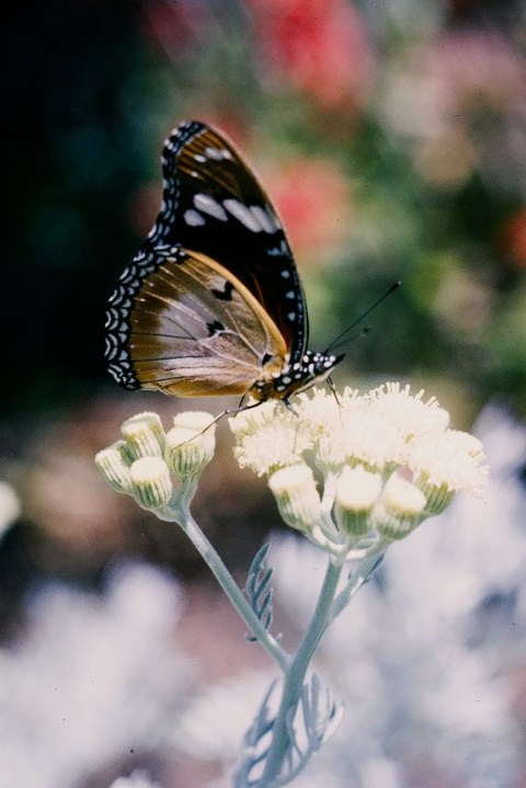 Butterfly and Flower in Rock Garden
