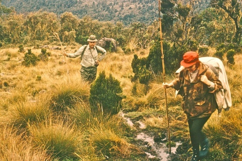 Plodding Mount Kenya