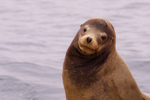 The Cutest Sea Lion