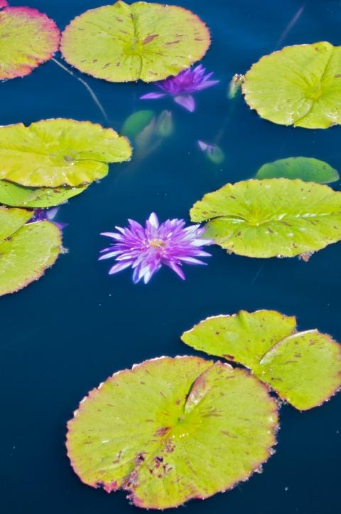 A Pond at the Denver Botanic Garden