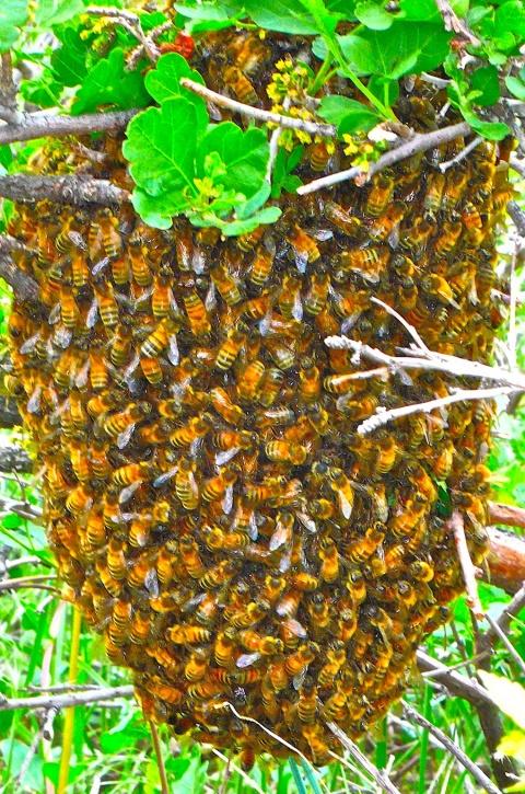 A Few Bees
