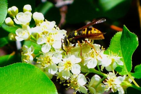 Wasp Eats