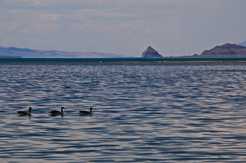 Canada Geese and the Pyramid-Shaped Rock at Pyramid Lake
