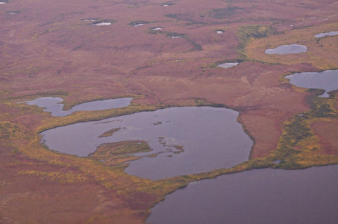 Treeless Tundra Near Kotzebue