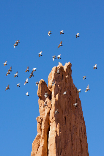 A Flock of Birds Circled Around and Around this Red Rock