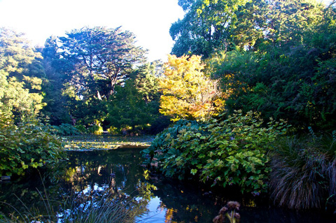 The Avon River Borders the Botanic Garden on Three Sides