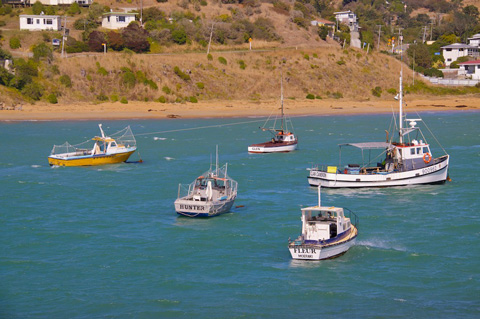 Some Moeraki Fishing Boats with Fleur's in the Front