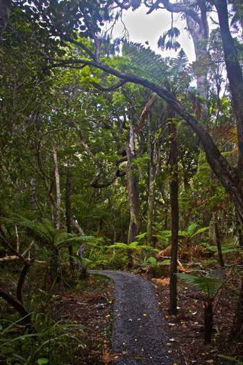 A Trail Through the Ulva Island Rainforest