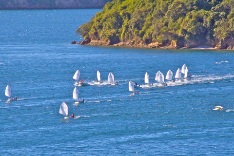 A Few of the Sailboats in a Regatta