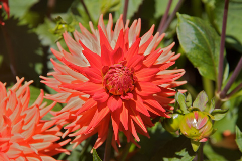Flowers in Timaru's Botanic Garden