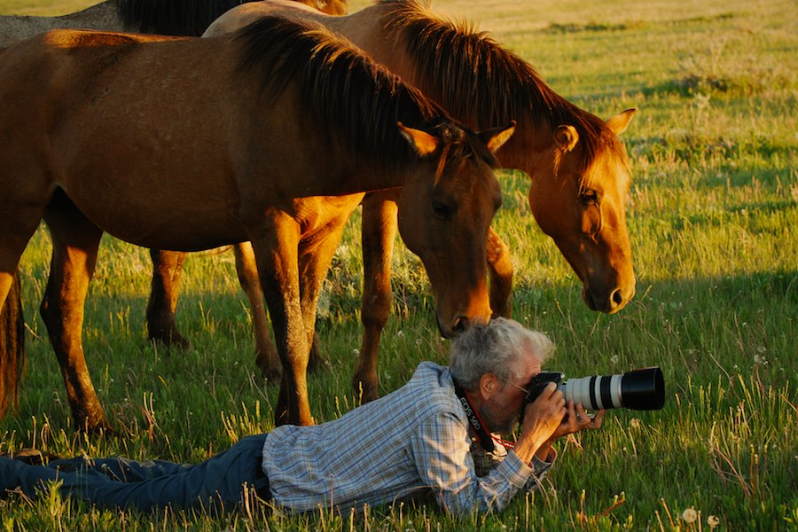 essays about wild horses Black hills wild horse sanctuary, hot springs  more photo essays  today,  large herds of wild horses can be seen roaming the sanctuary's 11,000 acres.