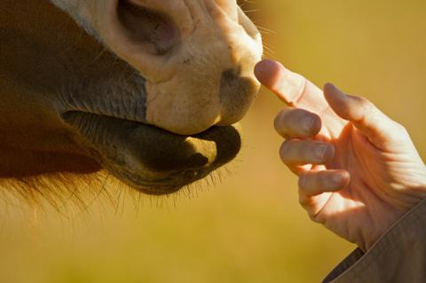 Inspecting Lori's Finger