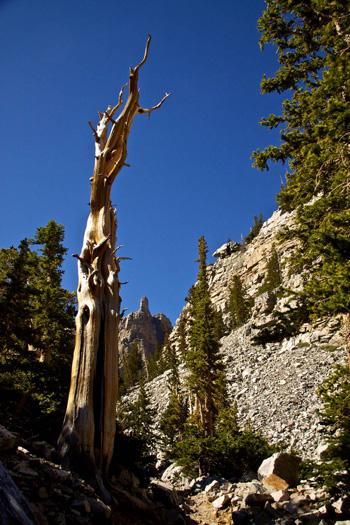 Pine and Peak