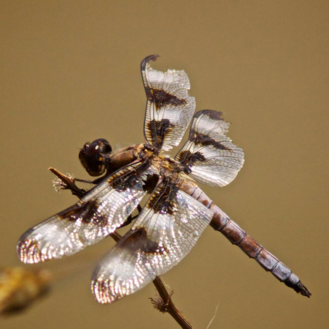 A Dragonfly at the Reservoir