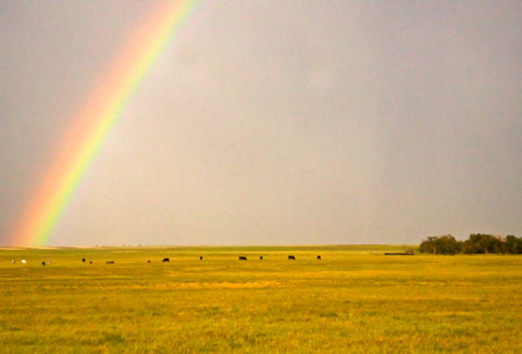 A Rainbow During a Rain Storm in the Grassland