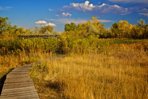 This Boardwalk Through the Marsh Approaches the Pond