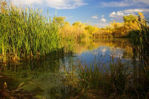 Viele Pond