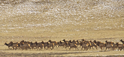 Elk Run