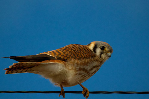 A Bird on a Wire