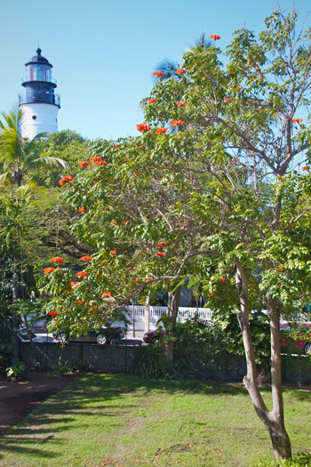 The Key West Lighthouse from the Hemingway Yard