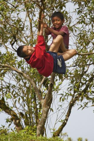 Two Boys Play in a Tree