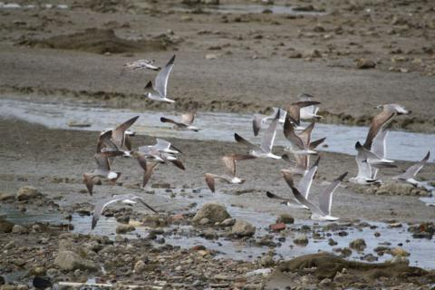 The Laughing Gulls Leave