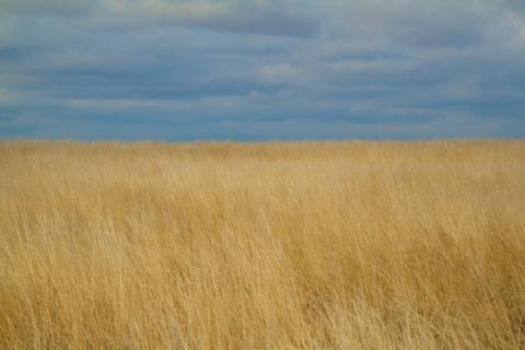 Short-grass Prairie at Rocky Mountain Arsenal