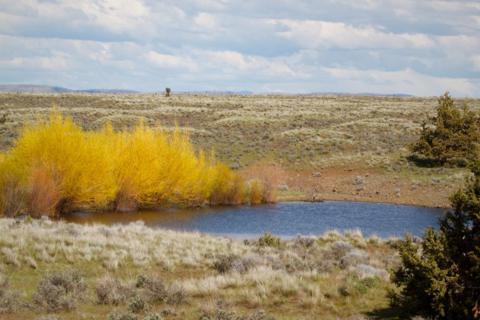 A Desert Pond