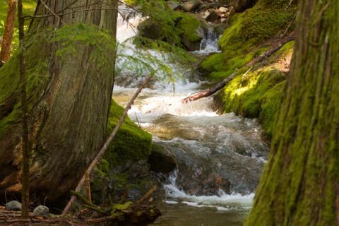 A Stream in North Cascades