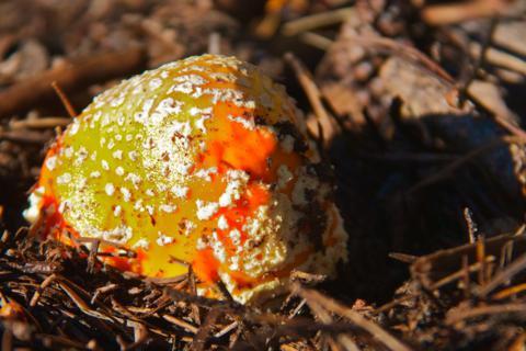 A Colorful Mushroom