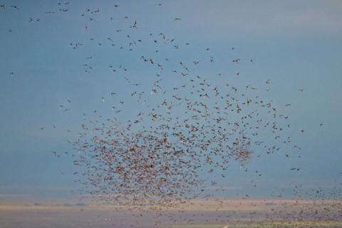 Bats Fly Over the San Luis Valley