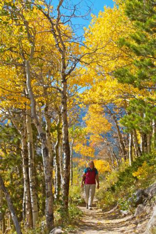 Under Aspens, Sharon Hikes the Bierstadt Lake Trail