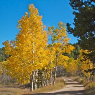 A Country Road Through Caribou Ranch