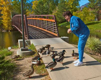 Liz Feeds Wild Mallards at Tantra Lake