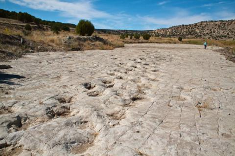 One Little Person and Many Big Dinosaur Tracks