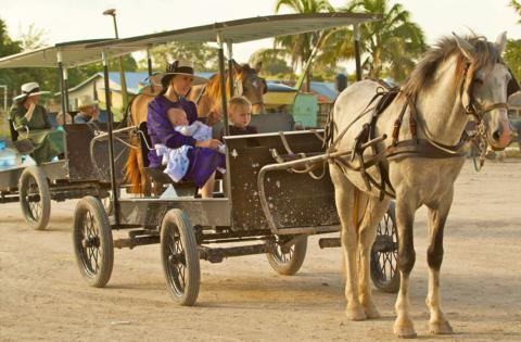 Mennonites in Belize Get Around with Horses and Buggies