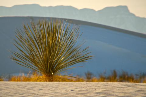 Mountains and Yucca